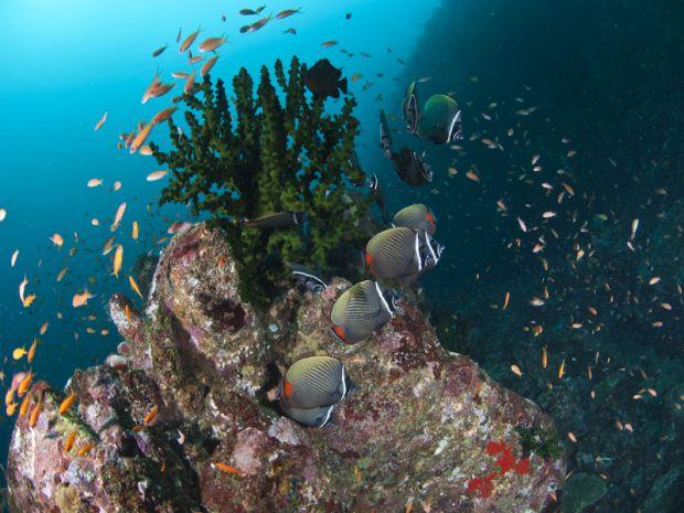 Keindahan Bawah Laut di Pantai Iboih