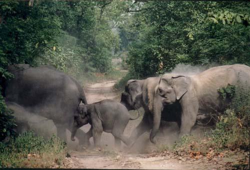 Dua Gajah Rusak Kebun Sawit di Aceh Barat