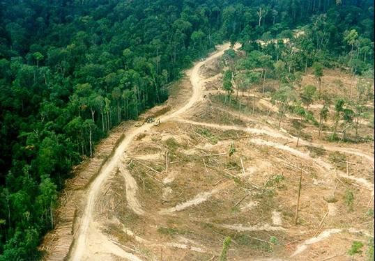 Berwisata Menyusuri Hutan Aceh