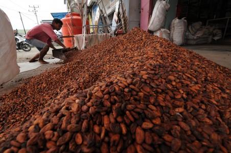 Peluang Indonesia Rebut Pasar Kakao di ASEAN Sangat Besar