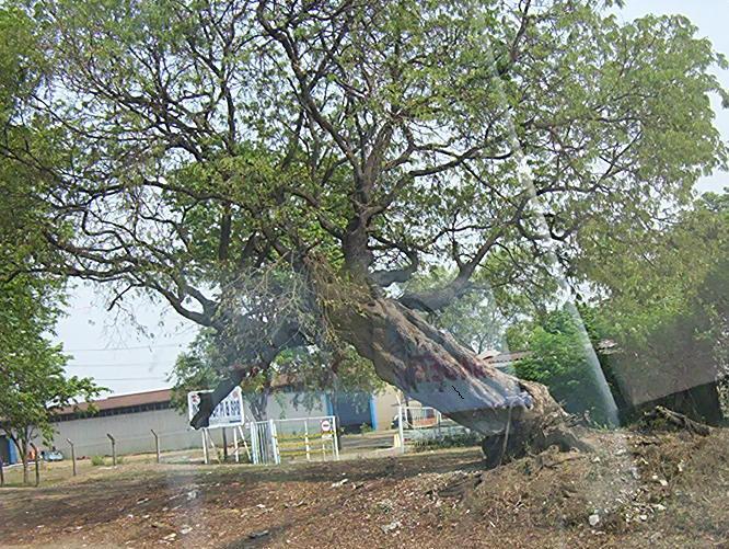 Angin Kencang Robohkan Pohon dan Rumah di Banda Aceh