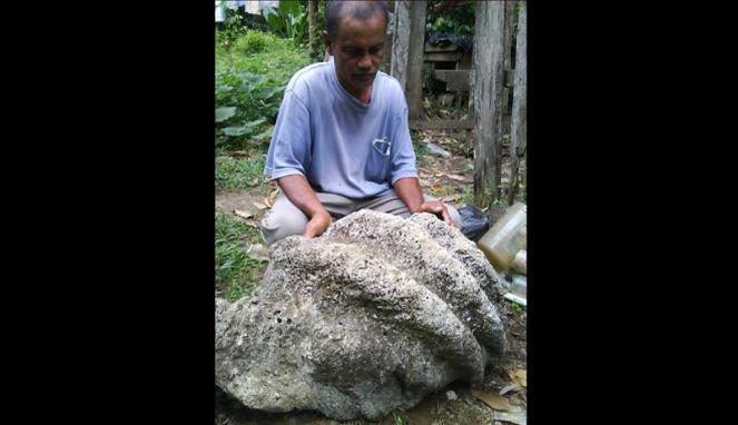 Fosil Cangkang Kerang Raksasa ditemukan di Langsa