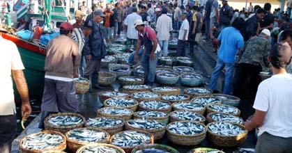 Persedian Ikan Segar di Banda Aceh Menipis