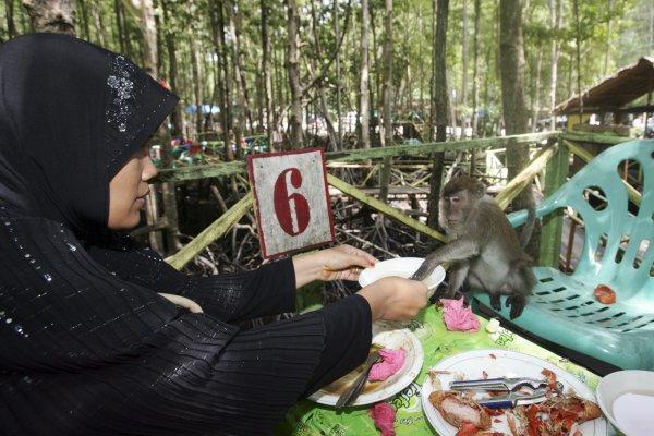 Wisata Hutan Bakau Kuala Langsa