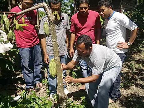 Kabid Perkebunan Bireuen Kunjungi Lokasi Binaan ACDK