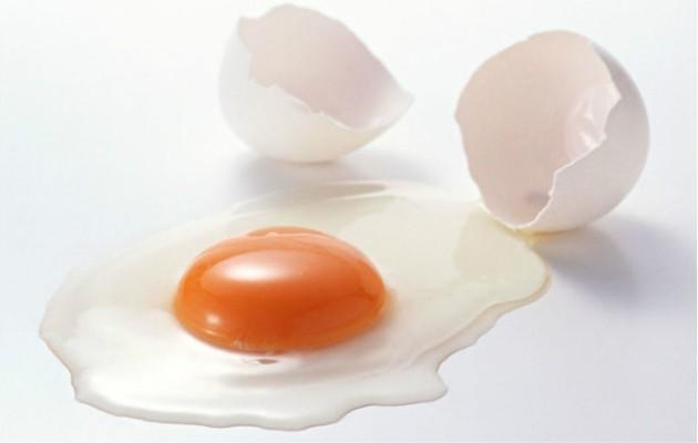 Ilustrasi putih telur