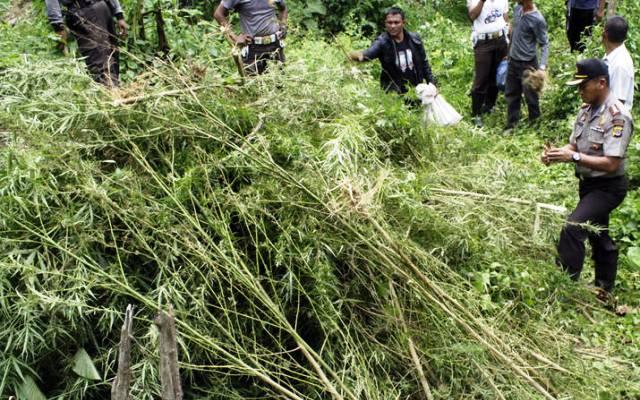 Peringati Hari Anti Narkoba Internasional, BNN Langsa Gelar Pagelaran Seni Aceh