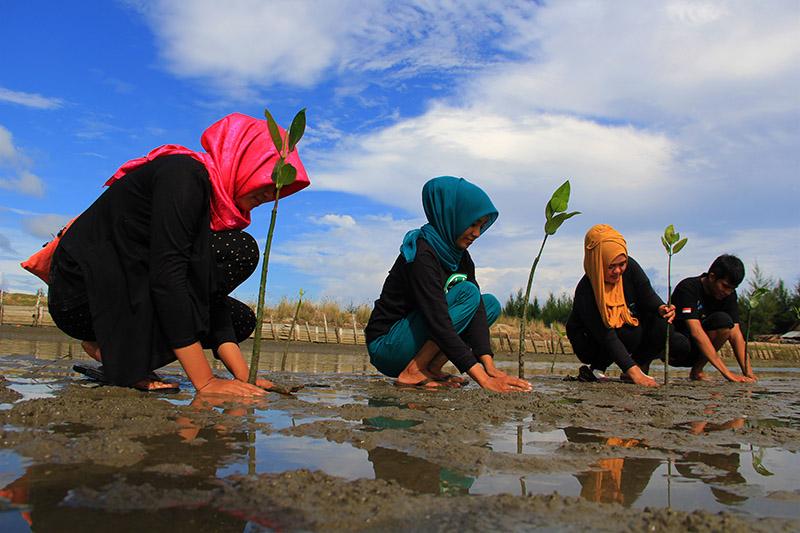 Komunitas Earth Hour Aceh menanam mangrove di Gampong Baro (Foto M Iqbal/SeputarAceh.com)