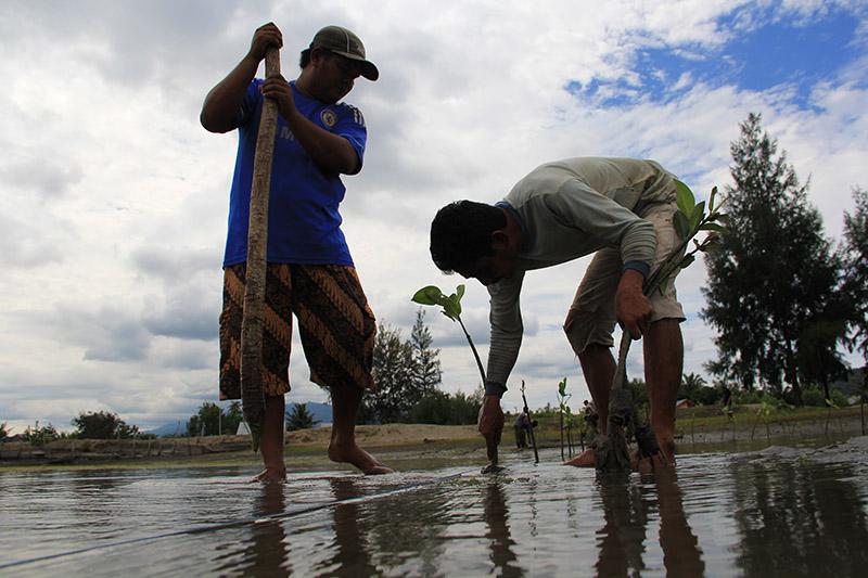 Warga Gampong Baro ikut menanam mangrove (Foto M Iqbal/SeputarAceh.com)